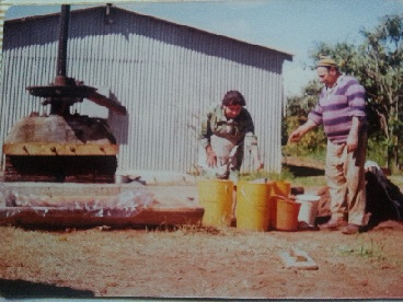Crushing olives in the old days